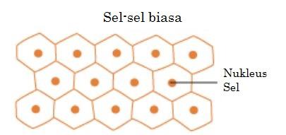 cells_BM