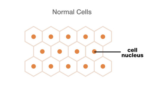 normal_cells